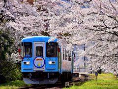樽見鉄道沿線に咲き広がる満開な桜の風景を探しに訪れてみた