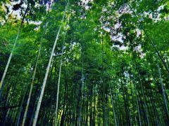 外出自粛で急上昇の血糖値 禁を破って再び綱島市民の森まで