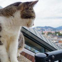 猫。島。電車。長崎を巡る旅