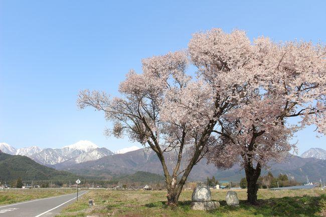 常念道祖神の桜を見に行ってみました。<br />残雪の山と桜の風景を探していて、見つけた安曇野・常念道祖神の桜。<br />所要があって休みをとった平日、天気もよく見頃のようだったため、<br />現地を10時に出れば間にあうと午前の少しの時間を使って少しだけ安曇野の桜を回ってみました。<br />訪問時、緊急事態宣言は7都府県で、翌日に全国に拡大となりました。