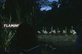 動物ずくめのシンガポールひとり旅 20 ナイトサファリ トラムの部