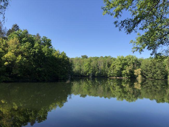 ロックダウンから1か月半。雨降った日がたった1日!稀にみる最高の春なのに!郊外で森林浴。