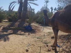 モロッコの写真