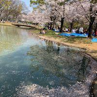 代々木公園の桜とアウトドアフェア(2019年4月)