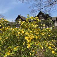 2020年3月 飛鳥山公園&旧古河庭園で花見