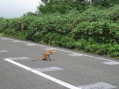 北海道自転車旅7日目(羅臼⇒ウトロ 52.4km)