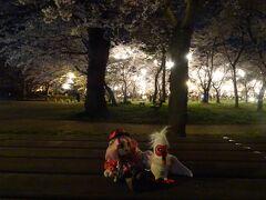 春めく上越へ、桜の見納めに行くヨ!!