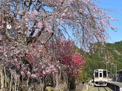 全線復旧した名松線2020~沿線を彩る桜の花と鉄道遺産~(三重)