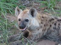 真夏のクルーガー国立公園で出会った動物達-Day1