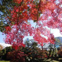 晩秋の紅葉が広がる小石川後楽園を散策