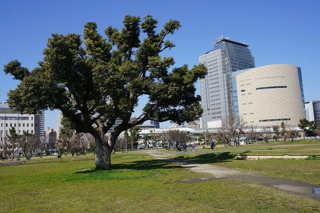 天気が良いので、大阪市内を散歩してみました。<br />画像は、難波宮跡公園にてです。<br /><br /><br />過去の大阪・大阪市中央区散歩記。<br /><br />関西散歩記~2020 大阪・大阪市中央区編~<br />https://4travel.jp/travelogue/11621048<br /><br />関西散歩記~2019 大阪・大阪市中央区・西区編~<br />https://4travel.jp/travelogue/11613533<br /><br />関西散歩記~2019-2 大阪・大阪市中央区編~<br />https://4travel.jp/travelogue/11611925<br /><br /><br />大阪まとめ旅行記。<br /><br />My Favorite 大阪 VOL.6<br />https://4travel.jp/travelogue/11593942<br /><br />My Favorite 大阪 VOL.5<br />https://4travel.jp/travelogue/11361830<br /><br />My Favorite 大阪 VOL.4<br />http://4travel.jp/travelogue/11242529<br /><br />My Favorite 大阪 VOL.3<br />http://4travel.jp/travelogue/11152287<br /><br />My Favorite 大阪 VOL.2<br />http://4travel.jp/travelogue/11036195<br /><br />My Favorite 大阪 VOL.1<br />http://4travel.jp/travelogue/10962773