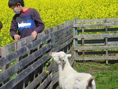 鶴ヶ島市高倉の菜の花 & 私の中での旅行記の基準 2020/3/25