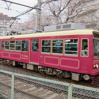 2018年3月。東京・桜巡り
