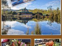 絶景&美食のタスマニア・キャンピングカー編【8 】クレイドルマウンテン・ロッジに泊まる♪