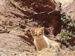 hot chocoの 世界もふもふ猫歩き♪ その1 ギリシャ、モロッコ、メキシコ、ヨルダン、トルコ、イタリア、日本