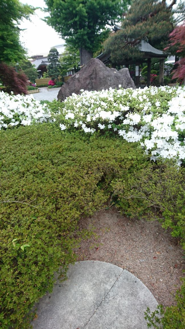 新型コロナウイルスで旅行に行きたくても行けないトラベラーの方も多いと思います。<br />私もそのひとりです。1日でも早く旅に出かけたい。そのために新型コロナウイルスが早く終息するように願っています。<br />朝の散歩がてら、山形市の浄光寺にツツジの花を見に行ってきました。<br />浄光寺は観光ガイドブックには掲載されていないと思います。ぜひツツジを見に行って見てはいかかでしょうか。<br />ちなみに、ここにはNHK-BSの「にっぽん縦断 こころ旅」という番組で、火野正平さんとチャリオ君も来たこともあります。<br />