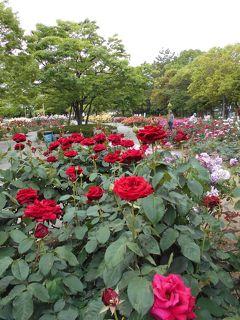 尼崎農業公園のバラ園