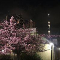 ロッテシティホテル錦糸町(中央委員会の旅 2日目)