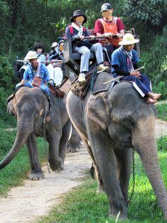 タイ4大王朝縦断の旅⑩ チェンマイ近郊「エレファントキャンプ」