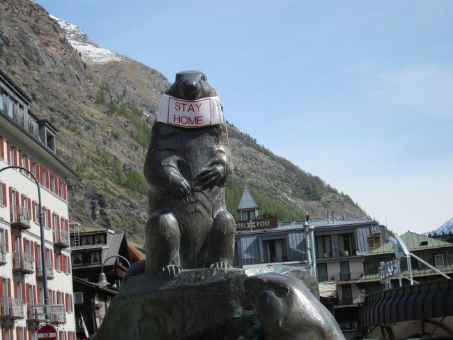 (5月8日撮影)マスクをつけてるマーモットが悲しい*Zermatt<br /><br />Gruyère旅行記の途中ですが、隔離政策中の有名観光地の様子を伝えたくて、この旅行記を先に書きました。<br /><br />(5月17日記載)<br />スイスで3月16日から始まった、新型コロナウィルスの隔離政策ですが、少しず解除が進み、5月11日から全てのお店とレストランの営業が条件付きで認められました。(レストランでは座席を離すなど)スイスでは多人数での集まり等の制限は有りますが、個人の移動制限は特に無く、スイス国内であればどこに行ってもOK、国境は未だ封鎖されてるます。<br /><br />そんな中、店舗の営業際会直前の週末、夫が仕事でZermattに行くことになり(泊まり)、私も一緒に行くことにしました。実は3月以来、自宅とお庭、買い物以外散歩にすら行かない、家族以外と話さず、完全引き篭もりの私の精神状態を夫はかなり心配していました。はっきり言ってプチ鬱状態でした。<br /><br />2週間前にも仕事でZermatに行っていた夫いわく、お店はもちろん、ホテルもゴンドラも全て閉鎖されてるので、村には全く人はいない。自宅にいるのと全く変わらないし、気分転換に来ないか、とのこと。私は、コロナウィルス感染等より子供達だけでの留守番の方が心配。(よく考えれば19歳と16歳/過保護ですね)。最初は渋っていたけど、お天気も良さそうだし、と重い腰をあげて、夫に同行してZermatに向かったのでした。<br /><br />参考までに。<br />●5月15日08:00時点、スイス及びリヒテンシュタインにおける感染者数等<br />●スイス各州の感染者数<br /><br /> 5月15日08:00時点(スイス連邦内務省保健庁発表)、スイス及びリヒテンシュタインにおける感染者数等は以下のとおりです。<br />※括弧内数字は10万人あたりの感染者数(単位:人)<br />(1)スイス<br />・累計感染者数:30,431人(前日比+51)(356.1(当館試算))<br />・累計死亡者数:1,594人(前日比+6)<br />(2)リヒテンシュタイン<br />・累計感染者数:83人(前日比±0)(216.3)<br />・累計死亡者数:1人(前日比±0)<br /><br />燐国、イタリアに比べてかなり頑張ってる感じです。