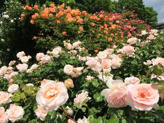 ショートトリップ花巡り♪ 五月の薫風にバラ香る♪