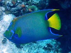 コスメルダイビング☆カリブ海の青の聖地