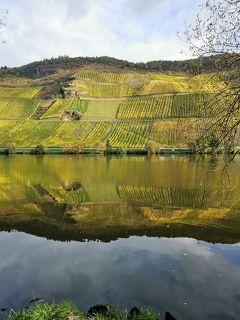 モーゼル川と黄金色葡萄畑ハイキング