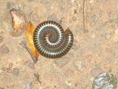 回想 2007年 カンボジア・シェムリアップ