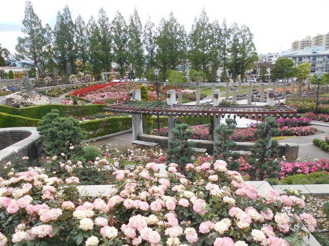 伊丹市の荒牧バラ公園に行った。尼崎農業公園よりはるかに大規模にバラが咲き誇っている。いろいろな種類があり楽しむことができる。ただ、この日は風が強かったためか香りはあまり楽しめなかった。