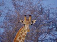 動物とワイナリードライブ 南アフリカ