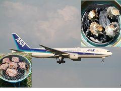2019年春の京浜島つばさ公園で飛行機を見ながらバーベキュー!