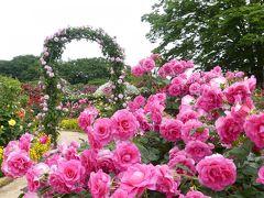 「あしかがフラワーパーク」のバラ_2020_最盛期は過ぎましたが、綺麗な花が沢山あります(栃木県・足利市)