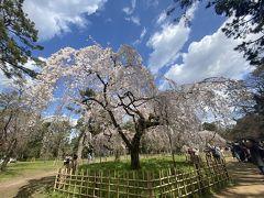 2020春 コロナ前最後の京都旅