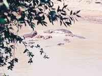 1991年、湾岸戦争の真っ只中に卒業旅行⑤(マサイマラで初のサファリ)