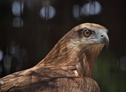 萃香園ホテルに宿泊して鳥好きには堪らない久留米鳥類センター訪問