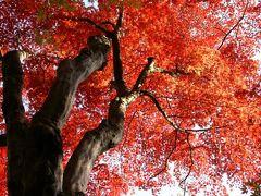 2008年 晩秋の奈良・京都を往く