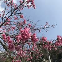 1月の沖縄~ぷらっと2泊3日のかぜまかせ旅