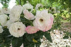 初夏の植物園♪ Vol.8