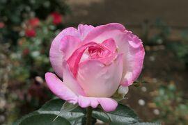 初夏の植物園♪ Vol.9