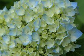 初夏の植物園♪ Vol.10
