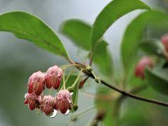 ショートトリップ花巡り♪ 松平郷の雨上がりの日と快晴の日の花散歩♪