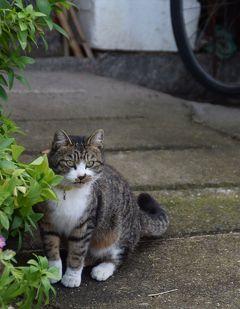 ★街十色~ 岡山 真鍋島 のいろ 猫に会うまで篇★