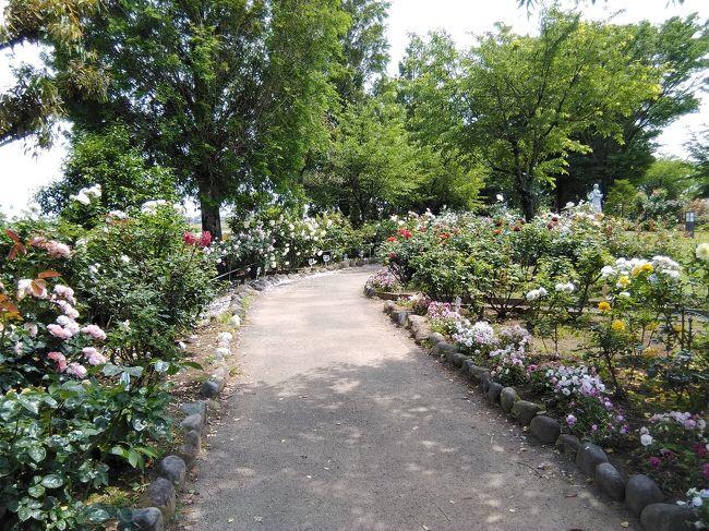 道の駅めぬま アグリパーク薔薇園 散策