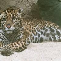 南東北の動物園と水族館めぐり④ 【那須どうぶつ王国】