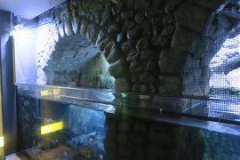 雨のミラノは美術館に行こう! ミラノ市立水族館