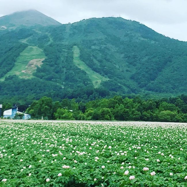 2010年夏からの約3年間。転勤で札幌に住んでいた私。<br />元々北海道は好きで、何度も旅していたのですが、在住の3年間に、毎月のように道内をめぐり、出張でも道内に飛び、道産子もびっくりなほど北海道の旅を極めてしまいました。<br />ということで、友人夫婦も一緒に行こう!と夫婦2組で行く3泊4日の旅をコーディネート。<br /><br />【1日目】移動日(福岡→新千歳)ニセコ泊<br />【2日目】ラフティング→積丹→ニセコ泊<br />【3日目】ゴルフ→札幌泊<br />【4日目】移動日(新千歳→福岡)<br /><br />食べて、飲んで、遊んで、ゴルフしてと盛りだくさんな4日間です。