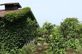 初夏の箱根♪ Vol.5 ☆小田原:緑の可愛い農家のある風景♪