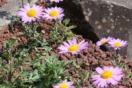 初夏の箱根♪ Vol.11 ☆箱根湿生花園:エントランスは美しいロックガーデン♪