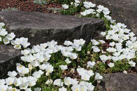 初夏の箱根♪ Vol.12 ☆箱根湿生花園:美しい初夏の風景♪