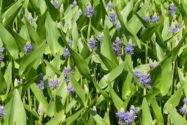 初夏の箱根♪ Vol.13 ☆箱根湿生花園:美しい初夏の風景♪